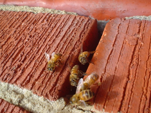 No, these are not masonry bees