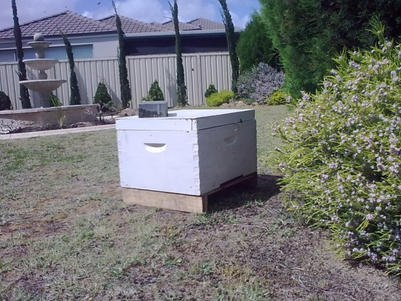 A temporary box supplied for a new swarm