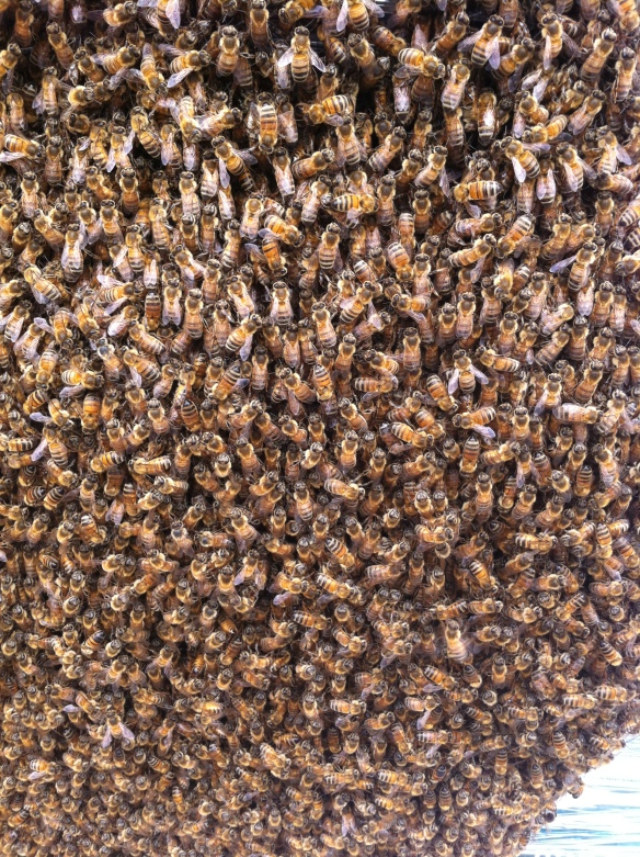 Take a Close Look at a bee swarm.
