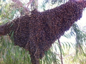 This large swarm appeared on a hot day at the end of summer.